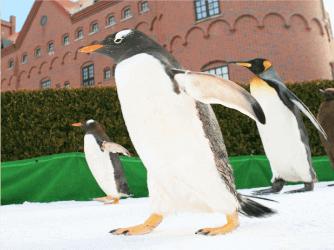 พาเหรดนกเพนกวิน